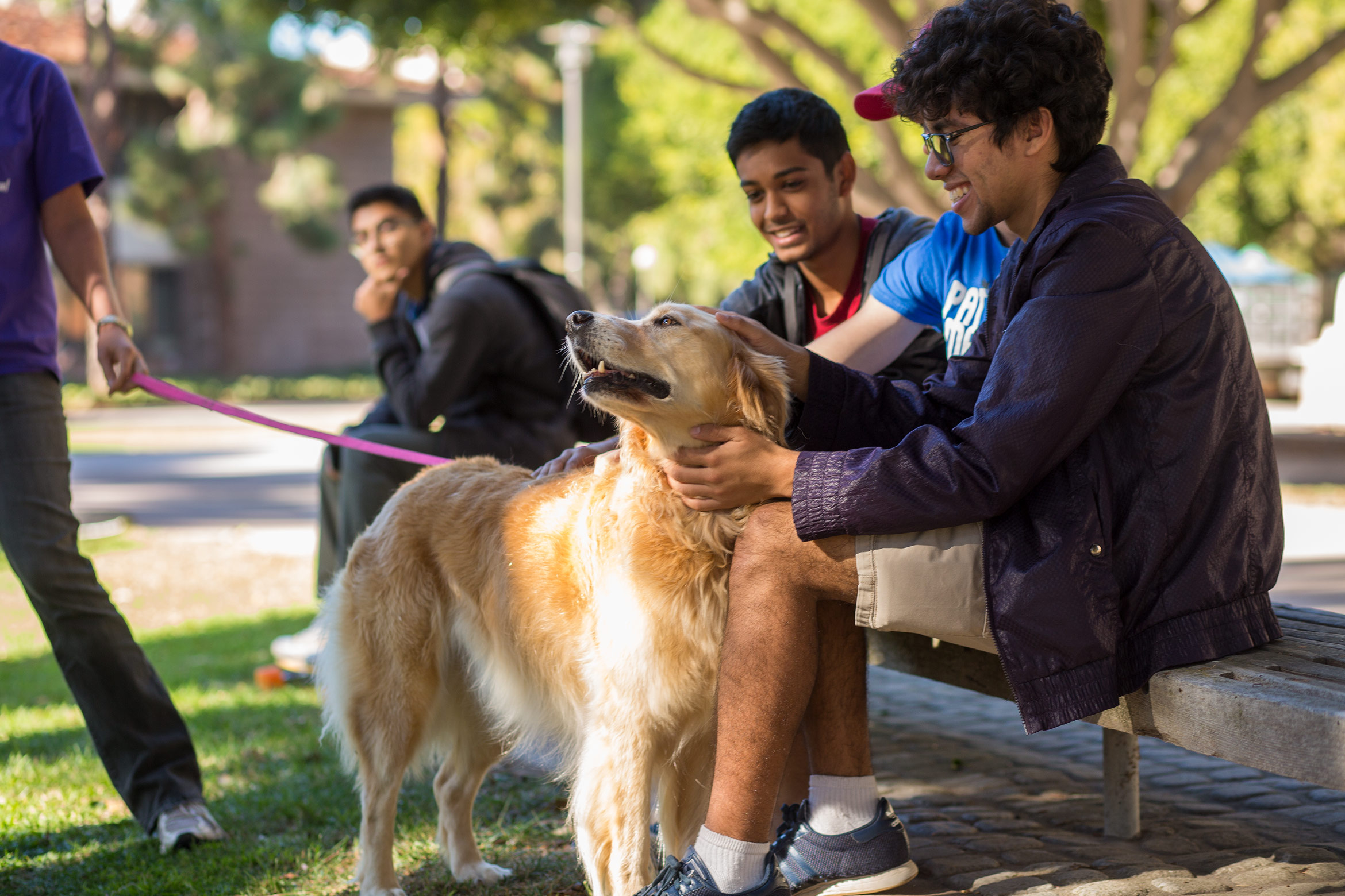 Dog therapy at UC Santa Barbara